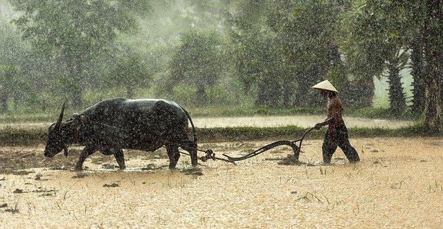 zemědělská práce